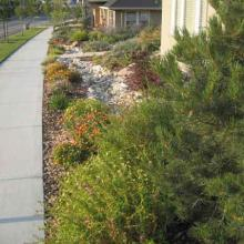 Curb Side Landscaping