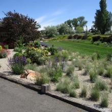 Xeric Landscaping